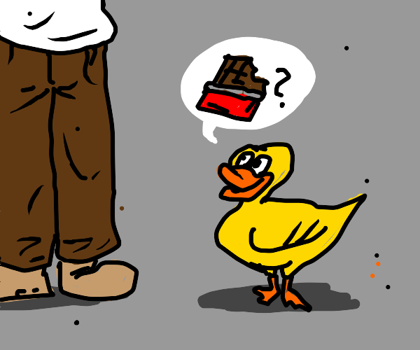 Duck asking for chocolate