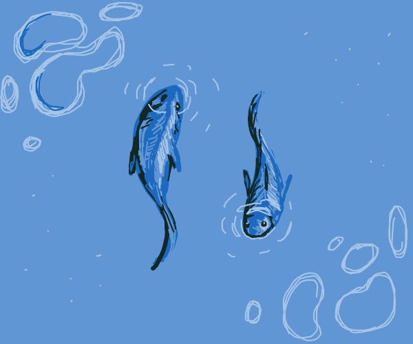 2 blue fishes swimming in opposite directions