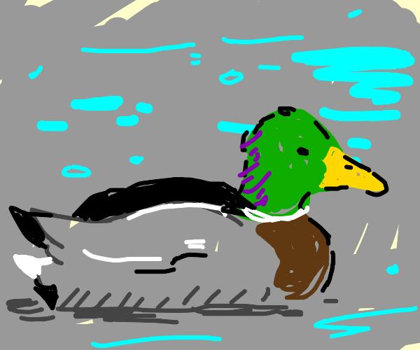 duck just vibing