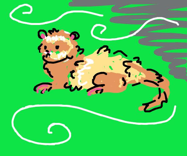 Ferret in a Cyclone
