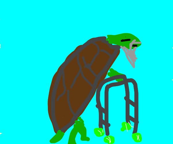 Geriatric Turtle