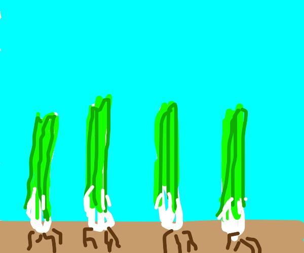 Leek farm