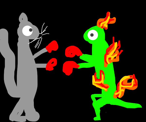 burning lizard fights with ferret cat