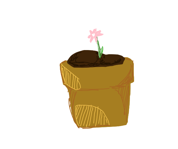 Beautiful pink flower in a pot