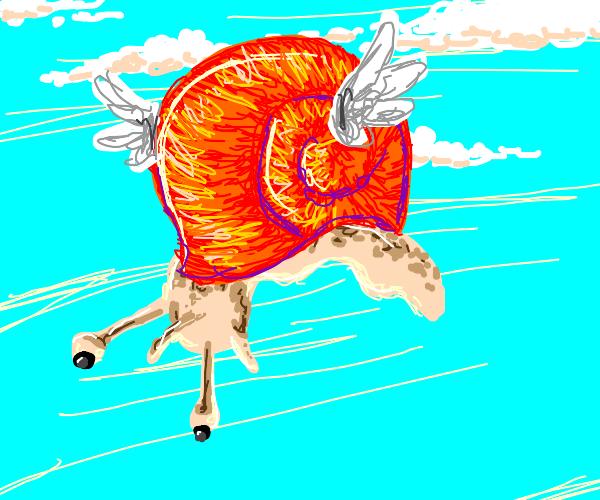 flying snail