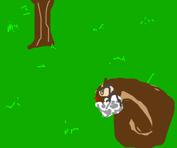 Rabid squirrel approaches a tree