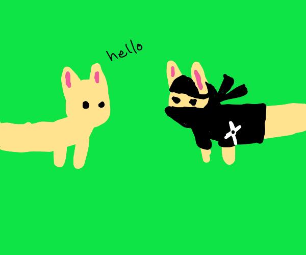 Long cat meets long ninja cat
