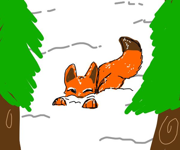 A lovable fox in the snow!