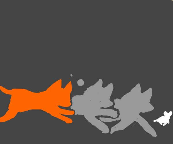 a fox contemplating its future actions