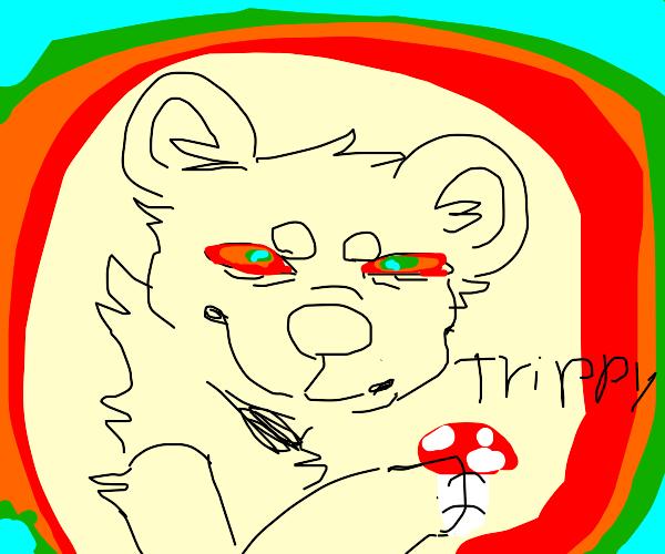 Bear after eating a wild mushroom