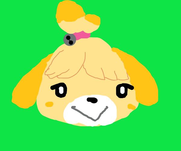 Isabelle dog