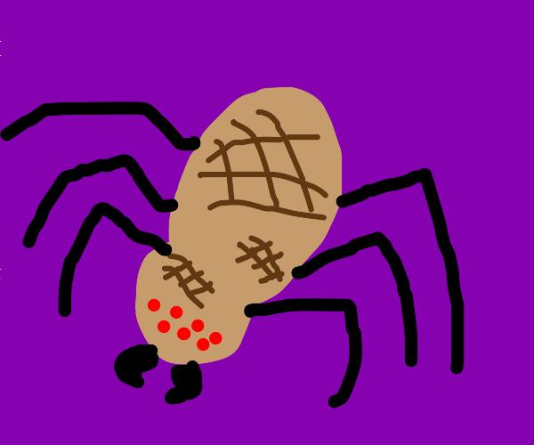 Peanut spider