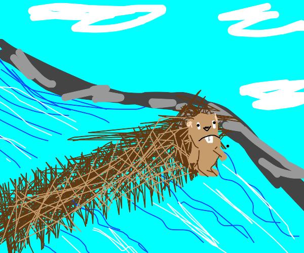 Beaver's dam needs some work