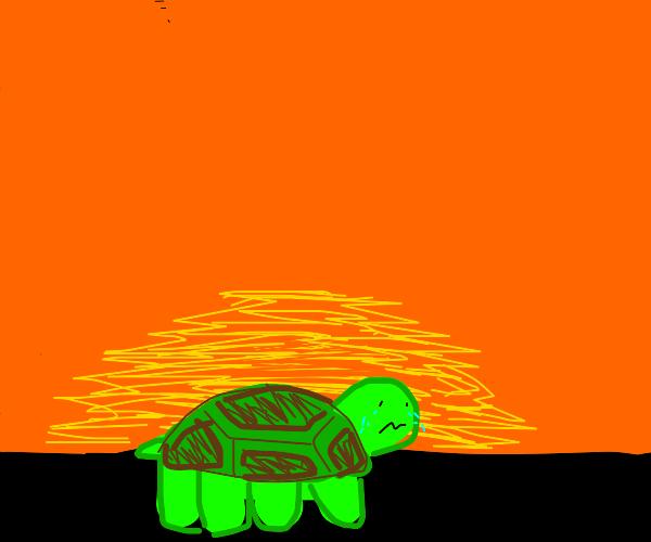 Miserable turtle at sunrise