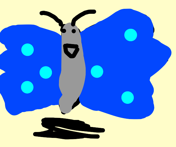 Grey butterfly with blue wings