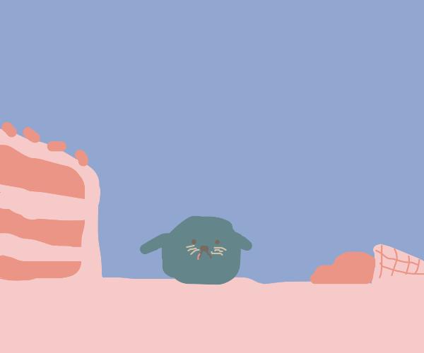 Seal on dessert island