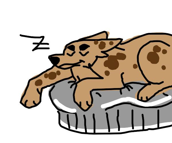 doggo lying in bed