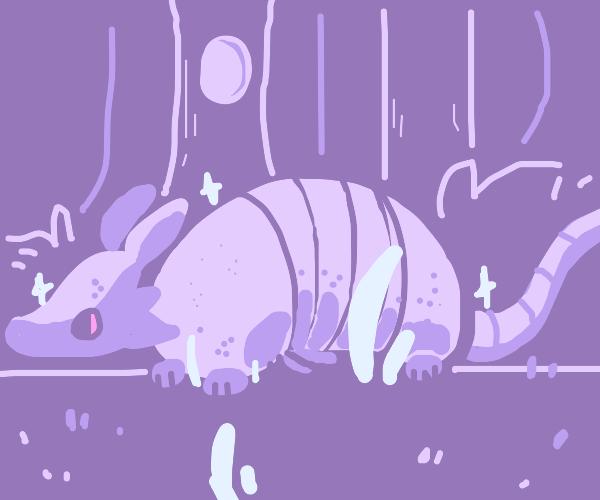 white armadillo
