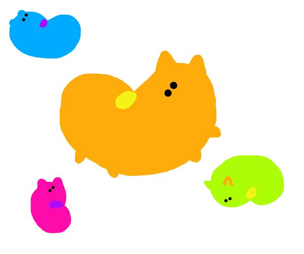 Jellybean Cats
