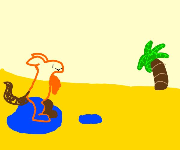 Kangaroo Playing In A Puddle