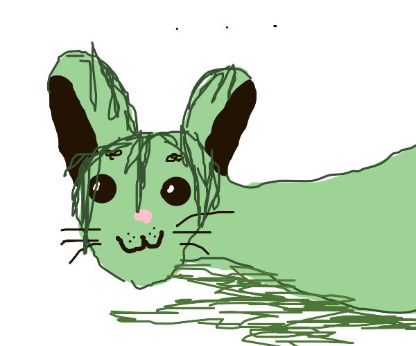 Angry rabbitslug with seaweed hair