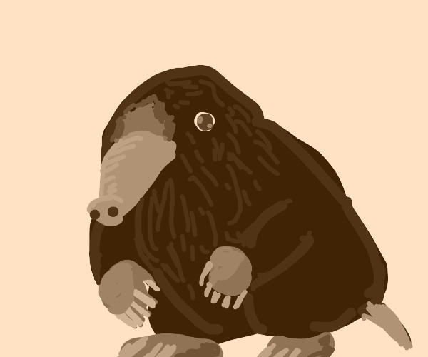 a cute mole