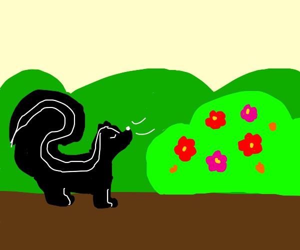 skunk smells beautiful flower bush shrub