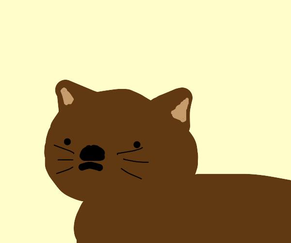 zoomed in cat