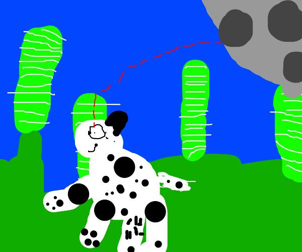 panda looking at the moon