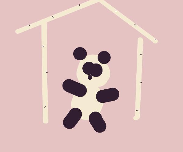 Panda In a bamboo home