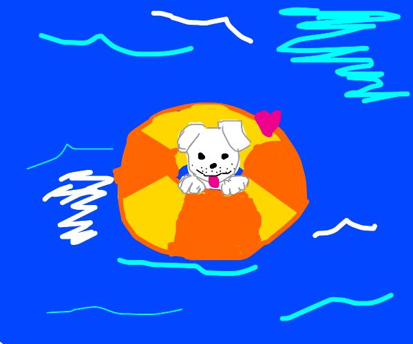 puppy loves the ocean