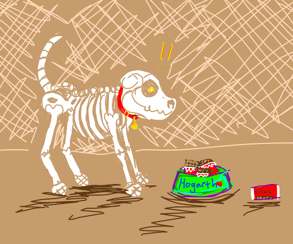 skeleton of dog is fed with chocolate