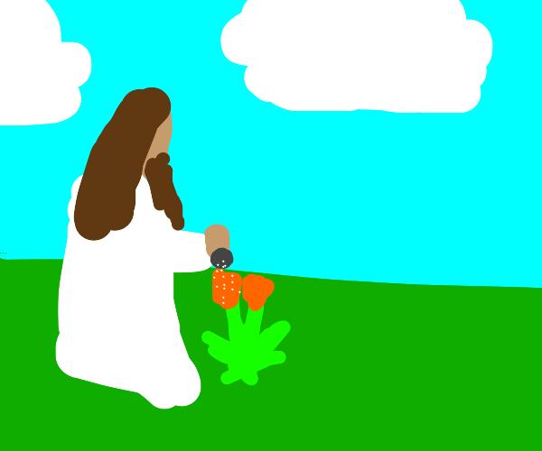 Jesus salts flowers