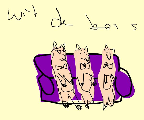3 lamas chillin