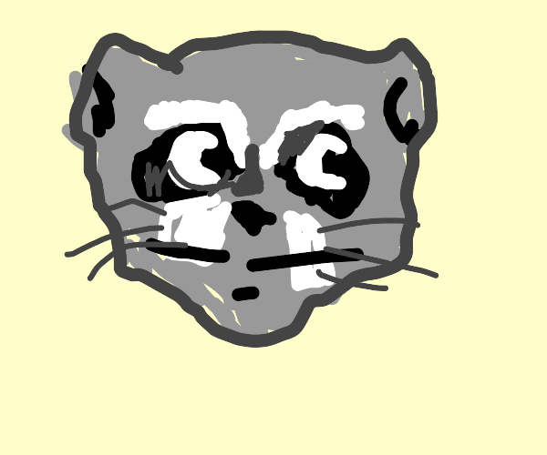 raccoon with moon eyes