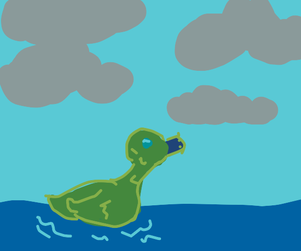 Duck floating in the water