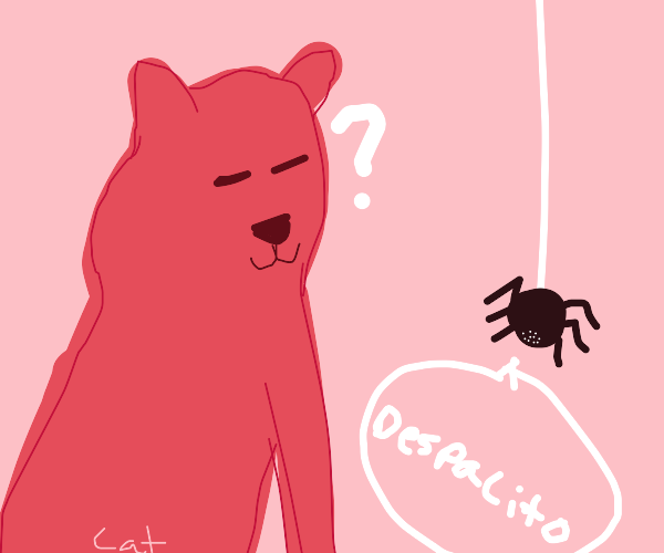 Cat confused by despacito spider