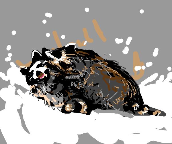 2 raccoons/baby pandas(?) playing