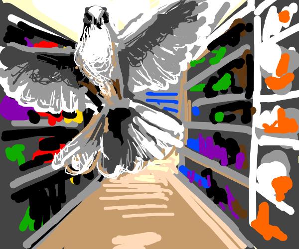 Dove in a Store