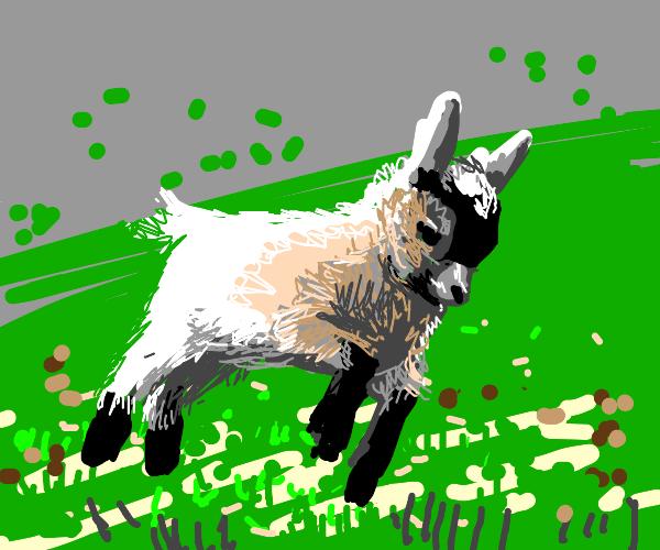 A very cute goat