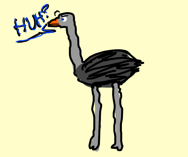 Confused ostrich