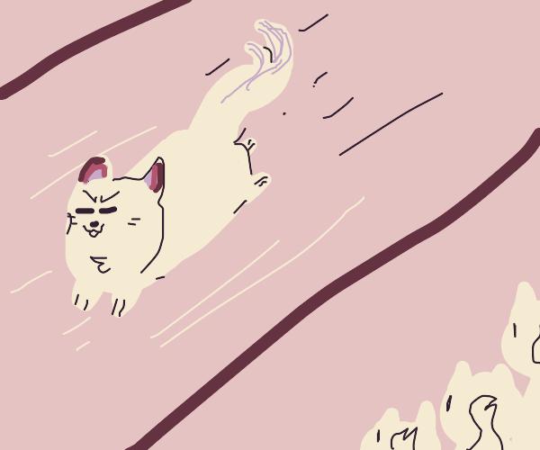 white dog runs  f a s t