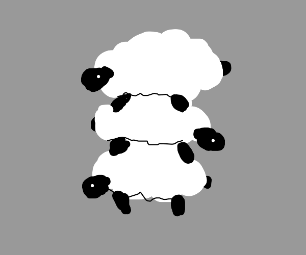 A stack of very fluffy sheep