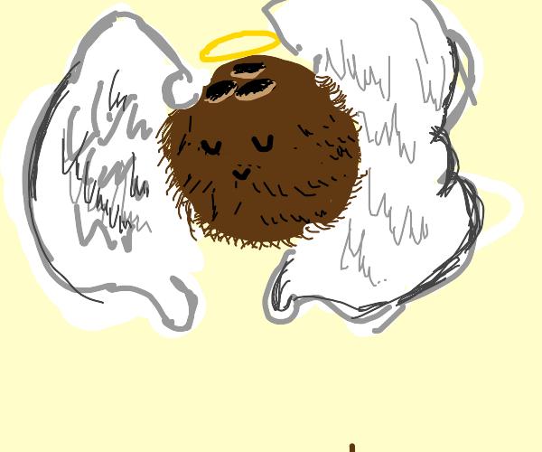 Coca angel