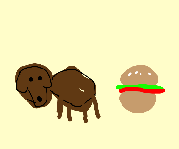 Puppy needs a hamburger