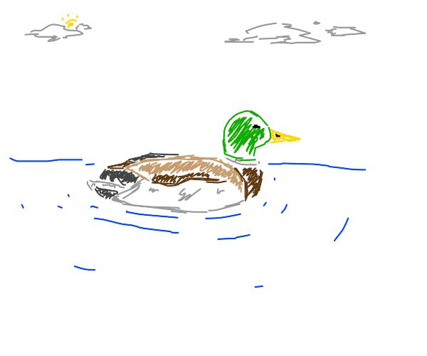 Mallard Duck (the green-headed ones)