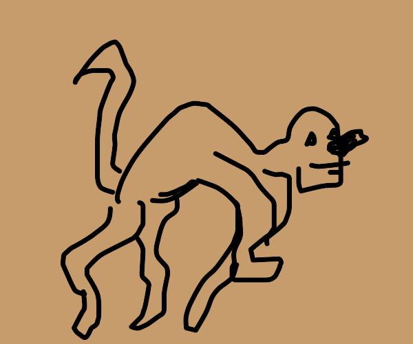 Capybara walking