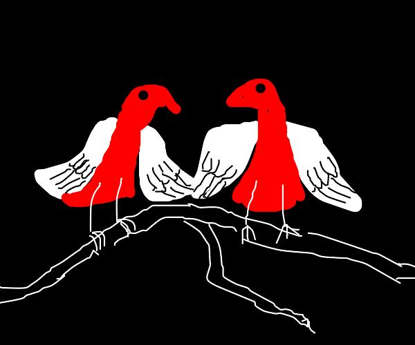 red n white birds shaking wings on black bg