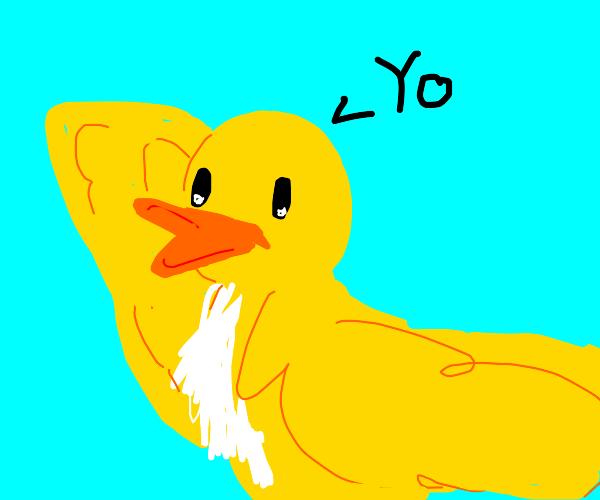 "Duck says ""yo"""