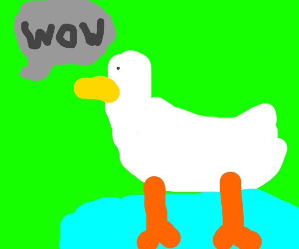 Wow, A duck!